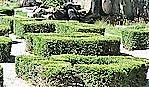 shrubs (2)